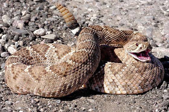 snake on rocks